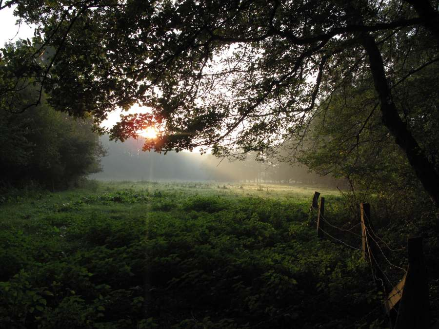 Morgenzauber