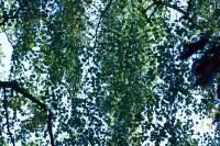 Helptree
