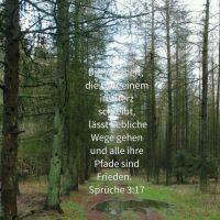 Gottes Wege sind liebliche Wege ( Spr 3 )