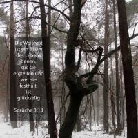 Ein Baum des lebens ist die Weisheit denen, die sie ergreifen, und wer sie festhält, ist glückselig ( Spr 3,18 )