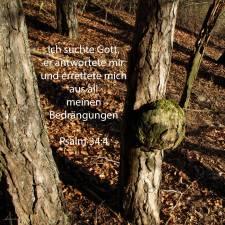 Ich suchte Gott und er antwortete mir; und aus allen meinen Beängstigungen errettete er mich ( Psalm 34,4 )