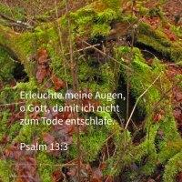 Erleuchte meine Augen, dass ich niucht entschlafe zum Tode ( Psalm 13, 3 )