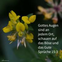 Gottes Augen sind an jedem Ort (Sprüche 15, 3)