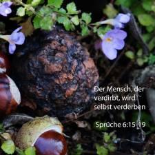 Darum wird plötzlich sein Verderben kommen; im Augenblick wird er zerschmettert werden ohne Heilung ( Sprüche 6, 15-19 )