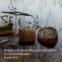 Befiehl Gott deinen Weg und vertraue auf ihn! und er wird handeln ( Psalm 37,5 )