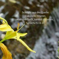 Die Quelle des Lebens ist in dir (Sprüche 5)