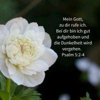 Gott hört dein Rufen (Psalm 5)