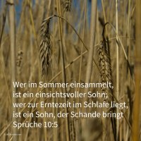 Wer im Sommer einsmmelt, ist ein einsichtsvoller Sohn, wer zur Erntezeit in tiefem Schlafe liegt, ist ein Sohn, der Schande bringt ( Sprüche 10, 5 )