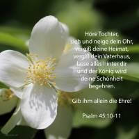 Höre, Tochter, und sieh, und neige dein Ohr; und vergiß deines Volkes und deines Vaters Hauses! Und der König wird deine Schönheit begehren, denn er ist dein Herr ( Psalm 45,10-11 )