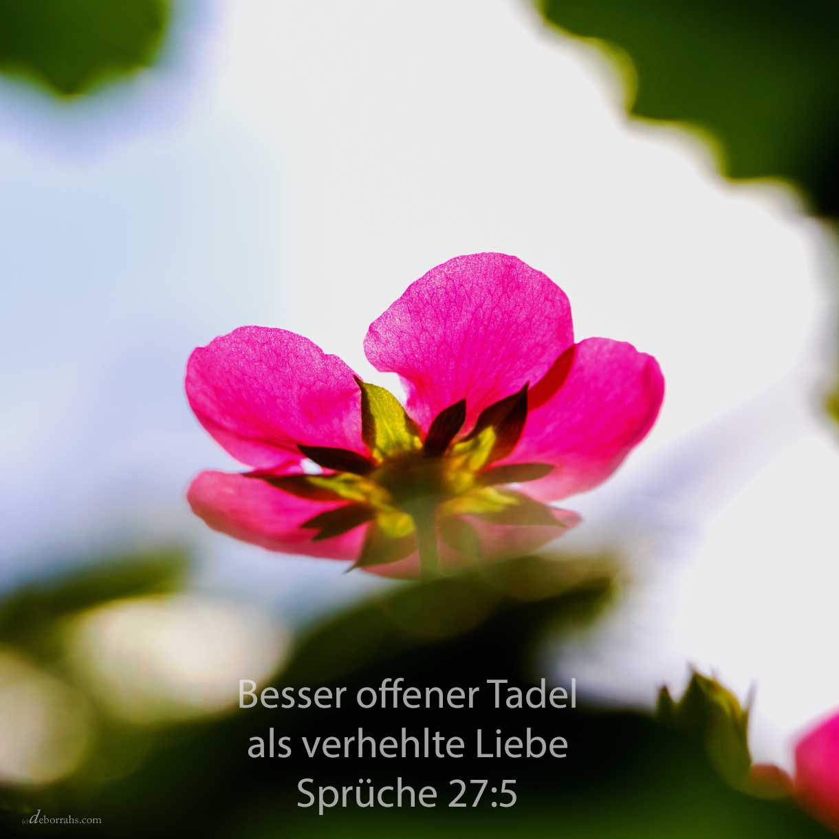 Besser offener Tadel als verhehlte Liebe ( Sprüche 27,5 )