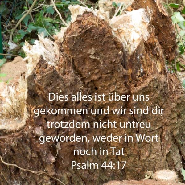 Dieses alles ist über uns gekommen, und wir haben deiner nicht vergessen, noch betrüglich gehandelt wider deinen Bund ( Psalm 44,17 )