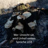 Wer Unrecht sät, wird Unheil ernten, und seines Zornes Rute wird ein Ende nehmen ( Sprüche 22,8 )