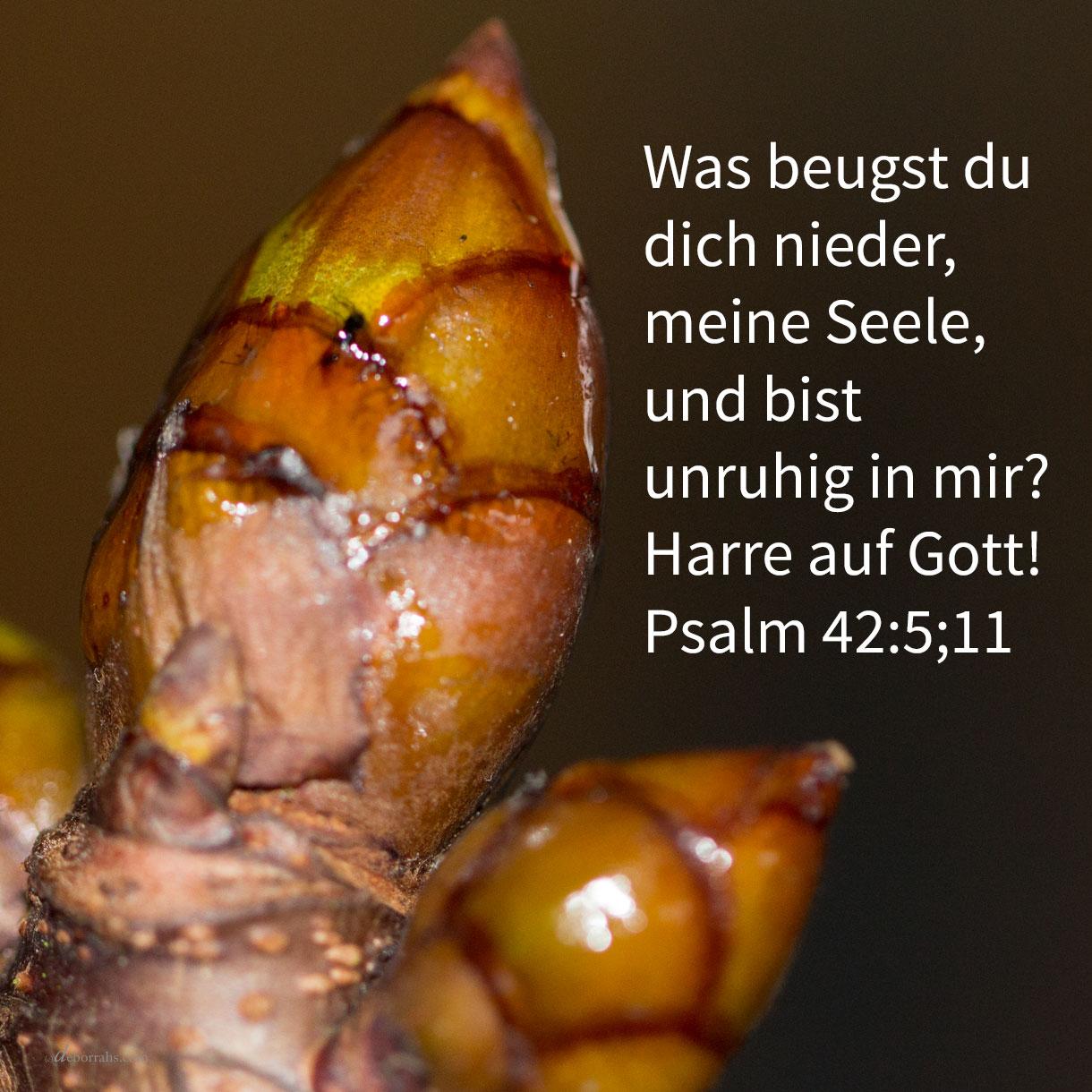 Was beugst du dich nieder, meine Seele, und bist unruhig in mir? Harre auf Gott! ( Psalm 42:5;11 )