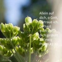 Ich aber, in meiner Lauterkeit hast du mich aufrecht gehalten und mich vor dich gestellt auf ewig ( Psalm 41,12 )