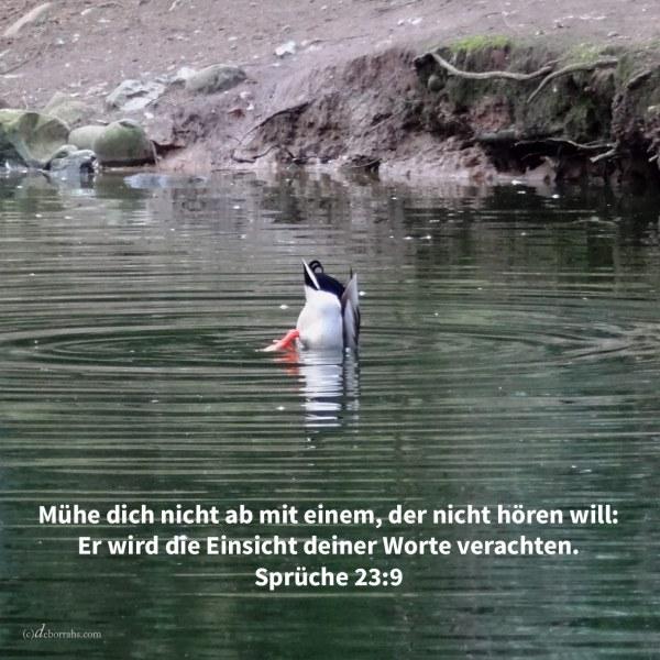 Rede nicht zu den Ohren eines Toren, denn er wird die Einsicht deiner Worte verachten ( Sprüche 23,9 )