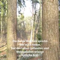 Denn wer mit findet, hat das Leben gefunden und Wohlgefallen erlangt von Jehova ( Sprüche 8,35 )