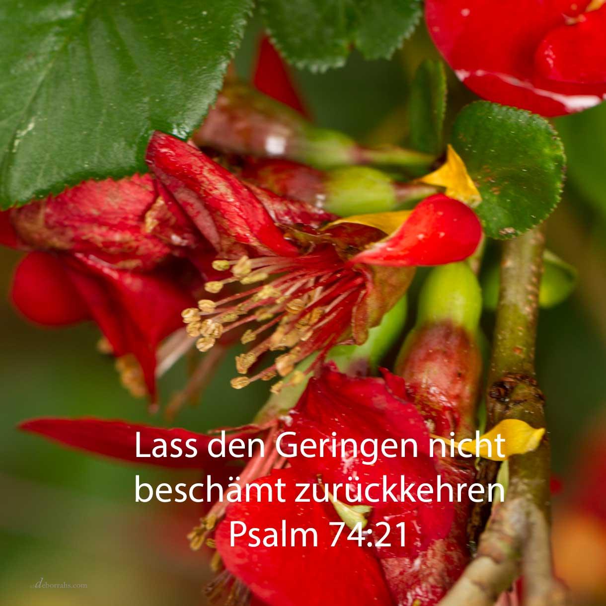 Nicht kehre beschämt zurück der Unterdrückte; lass den Elenden und Armen deinen Namen loben ( Psalm 74,21 )
