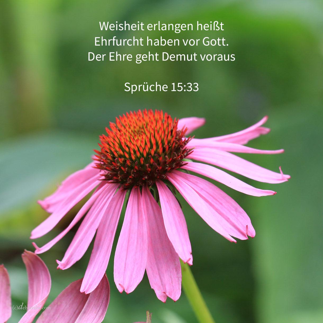 Die Furcht Jehovas ist Unterweisung zur Weisheit, und der Ehre geht Demut voraus ( Sprüche 15,33 )
