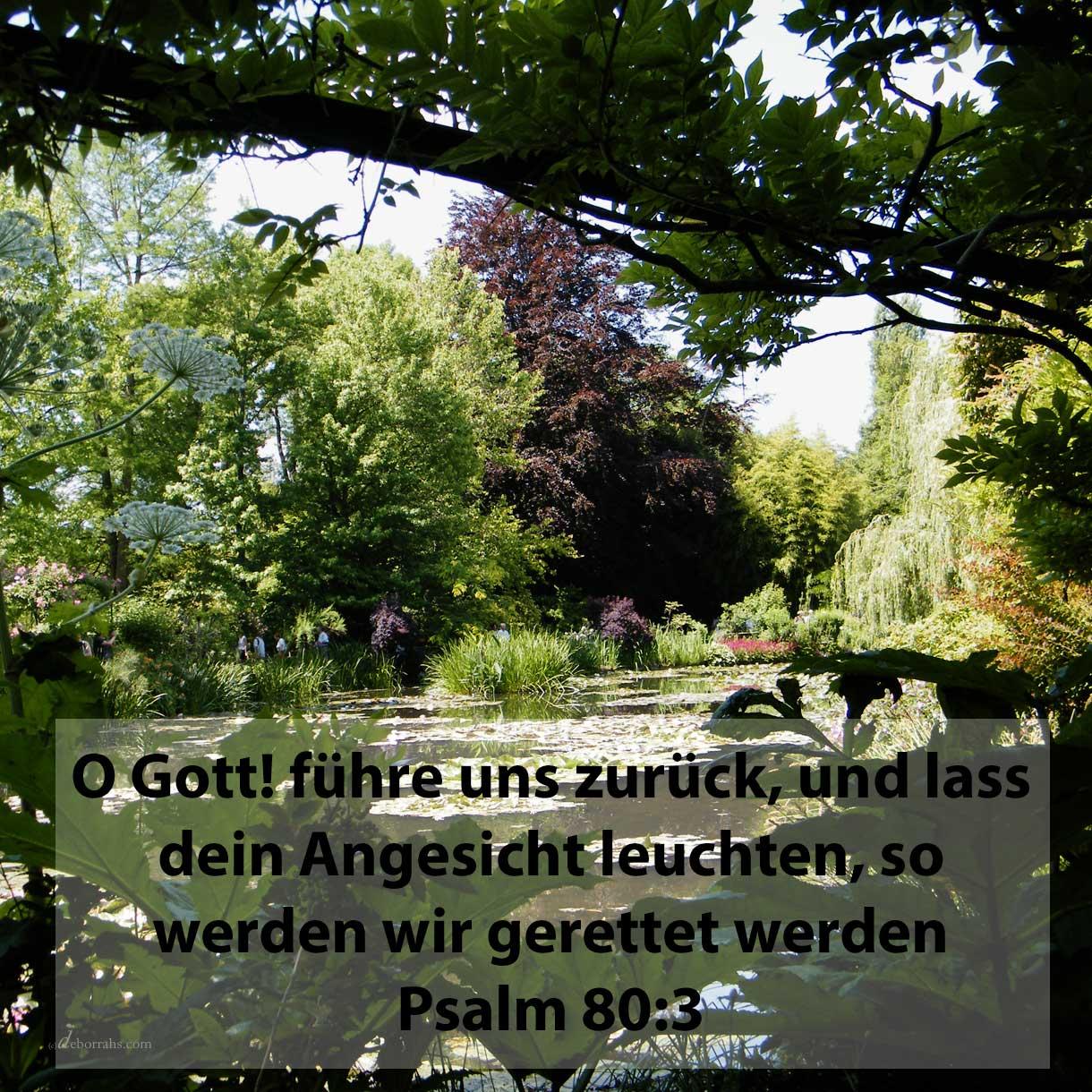 O Gott! führe uns zurück, und lass dein Angesicht leuchten, so werden wir gerettet werden ( Psalm 80,3 )
