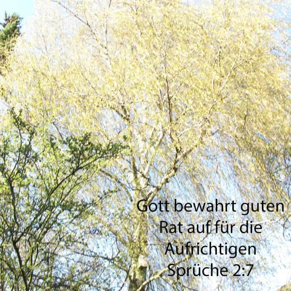 Gott bewahrt klugen Rat auf für die Aufrichtigen, er ist ein Schild denen, die in Vollkommenheit wandeln ( Sprüche 2,7 )