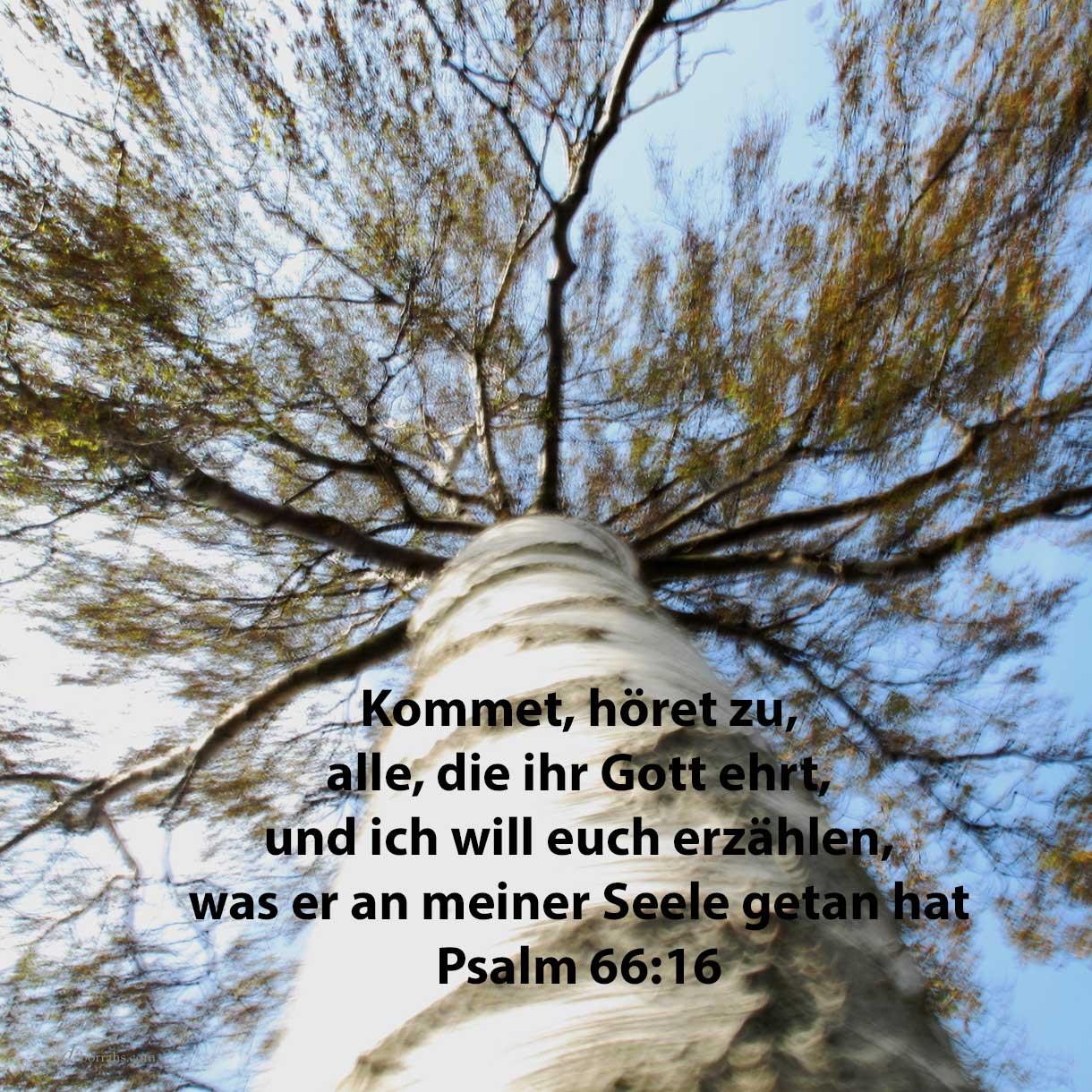 Kommet, höret zu, alle, die ihr Gott fürchtet, und ich will erzählen, was er an meiner Seele getan hat ( Ps 66,16 )