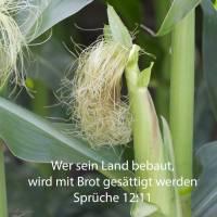 Wer sein Land bebaut, wird mit Brot gesättigt werden; wer aber nichtigen Dingen nachjagt, ist unverständig ( Spr 12,11 )