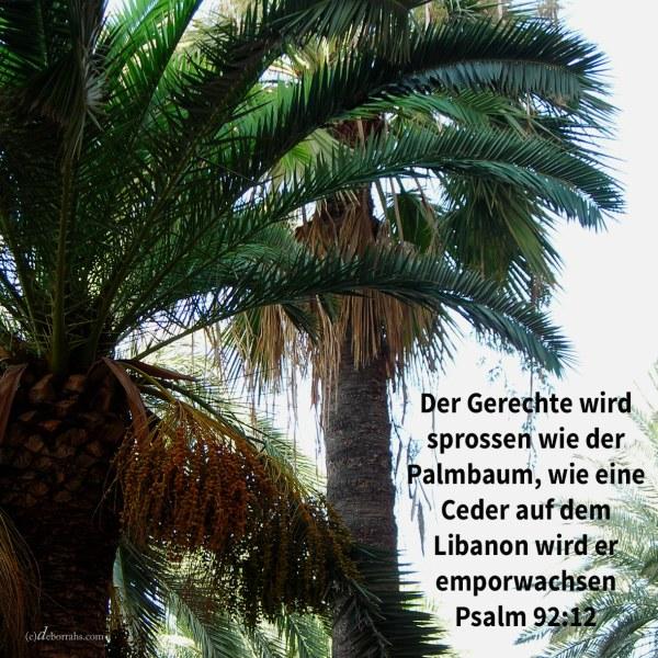 Der Gerechte wird sprossen wie der Palmbaum, wie eine Ceder des Libanon wird er emporwachsen ( Ps 92,12 )