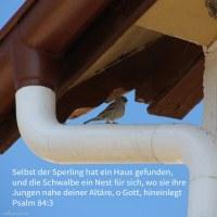 Selbst der Sperling hat ein Haus gefunden, und die Schwalbe ein Nest für sich, wo sie ihre Jungen hingelegt deine Altäre, Jehova der Heerscharen, mein König und Gott ( Psalm 84:3 )