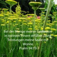 Bei der Menge meiner gedanken in meinem Innern erfüllten deine Tröstungen meine Seele mit Wonne ( Psalm 94,19 )