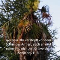 Wer sein Ohr verstopft vor dem Schrei des Armen, auch er wird rufen und nicht erhört werden ( Sprüche 21,13 )
