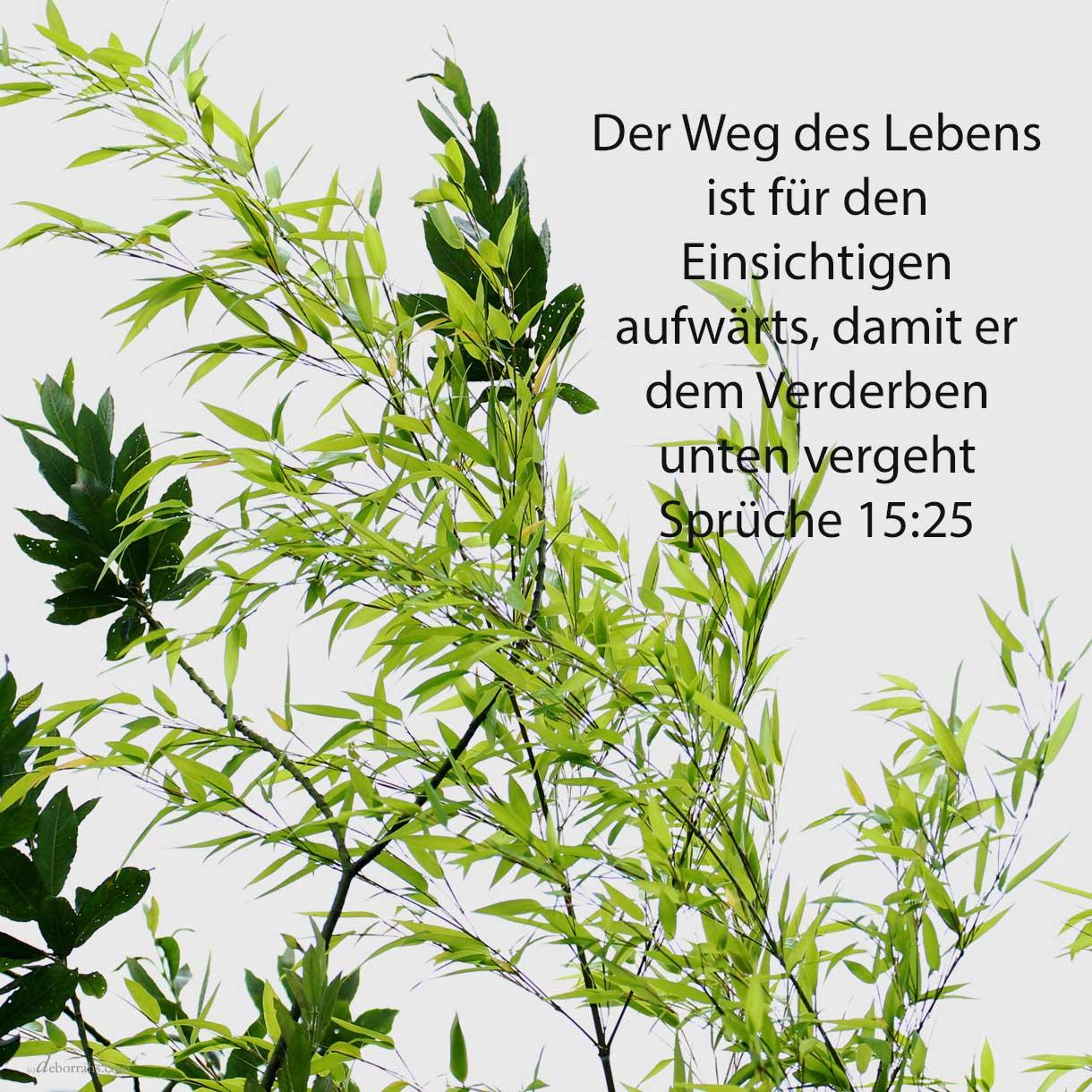 Der Weg des Lebens ist für den Einsichtigen aufwärts, damit er dem Scheol unten entgehe ( Sprüche 25,24 )