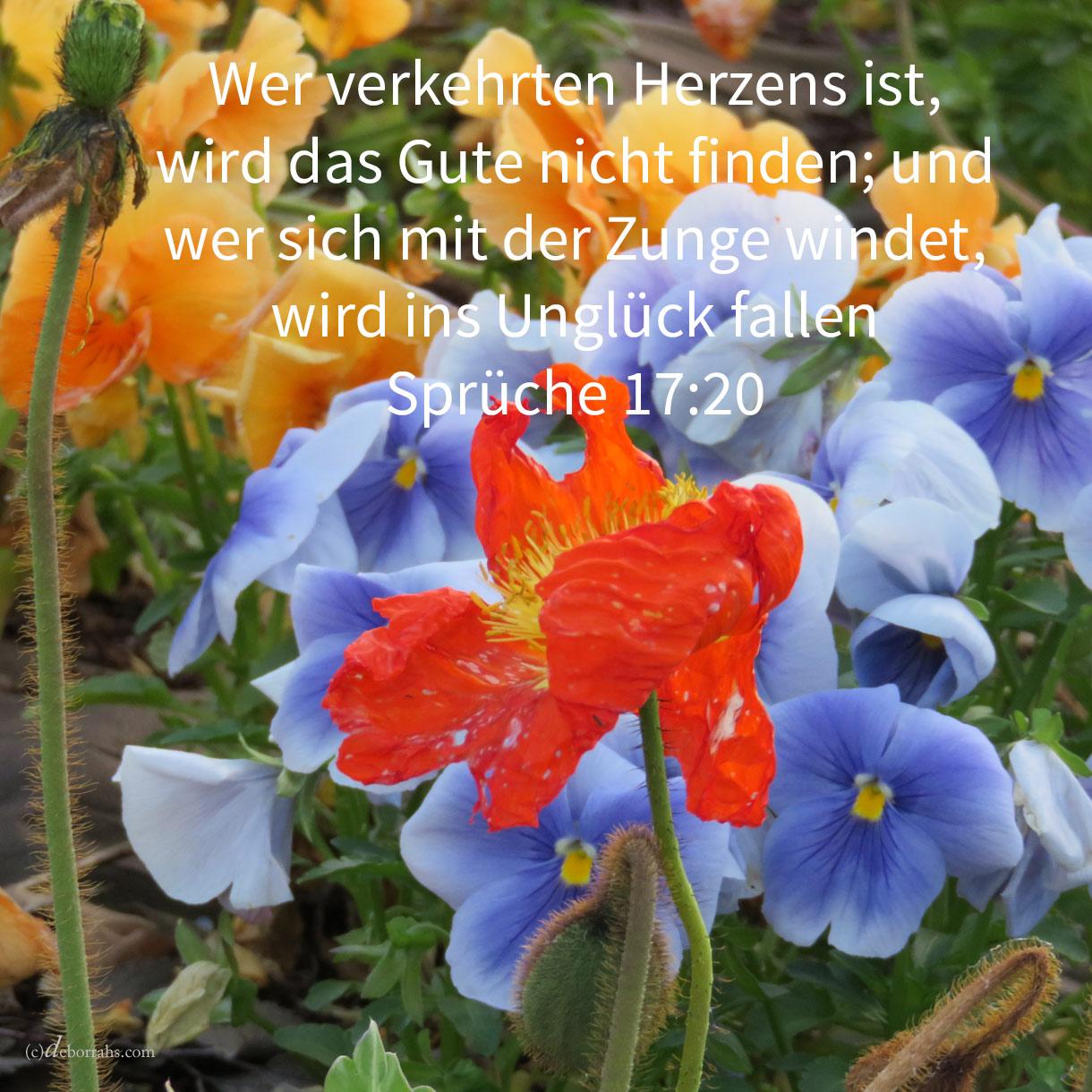 Wer verkehrten Herzens ist, wird das Gute nicht finden; und wer sich mit seiner Zunge windet, wird ins Unglück fallen ( Spr 17,20 )