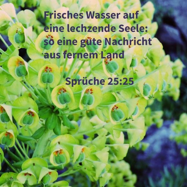 Frisches Wasser auf eine lechzende Seele: so eine gute Nachricht aus fernem Lande ( Sprüche 25,25 )