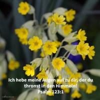 Ich hebe meine Augen auf zu dir, der du thronst in den Himmeln! ( Psalm 123,1 )