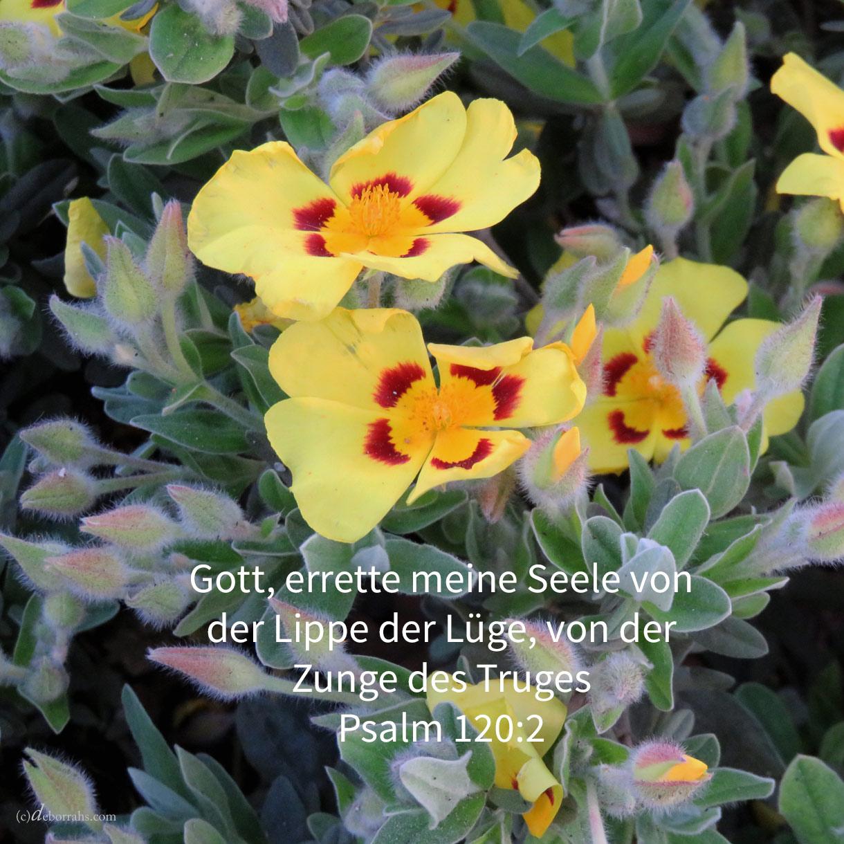 Jehova, errette meine Seele von der Lippe der Lüge, von der Zunge des Truges! ( Ps 120,2 )
