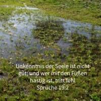 Unkenntnis der Seele ist nicht gut; und wer mit den Füßen hastig ist, tritt fehl ( Sprüche 19,2 )