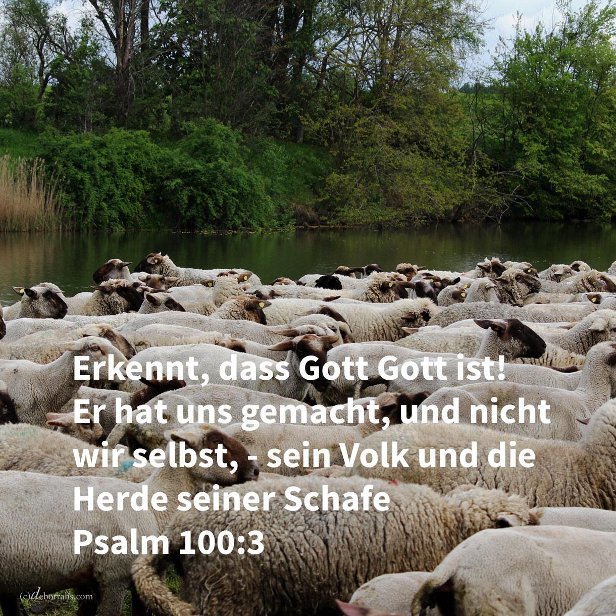Erkennet, dass jehova Gott ist! Er hat uns gemacht, und nicht wir selbst, - sein Volk und die Herde seiner Weide ( Psalm 100,3 )