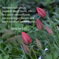 Wendet euch zu meiner Zucht! Siehe, ich will euch meinen Geist hervorströmen lassen, will euch kundtun meine Reden ( Sprüche 1,23 )