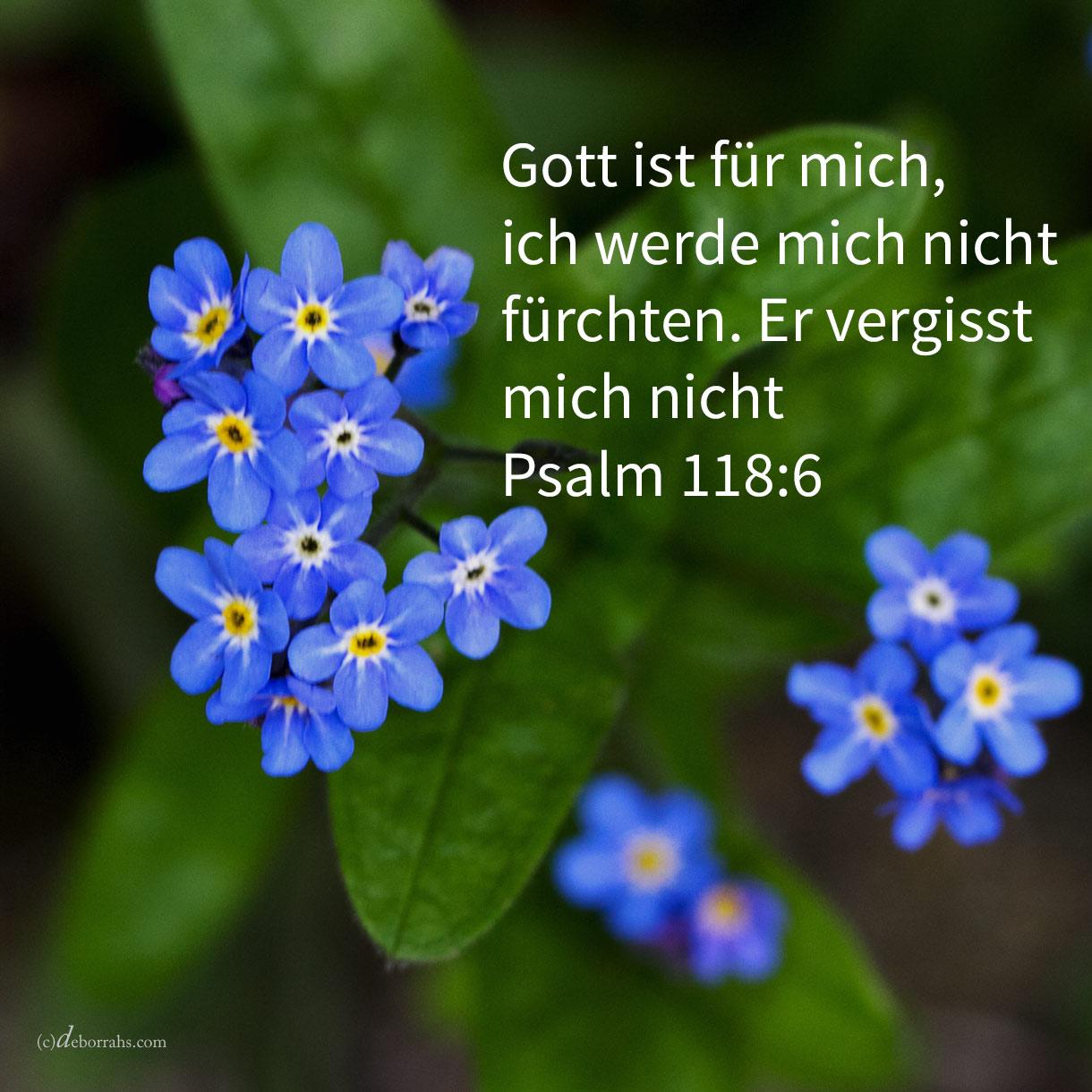 Jehova ist für mich, ich werde mich nicht fürchten; was sollte der Mensch mir tun? ( Psalm 118,6 )
