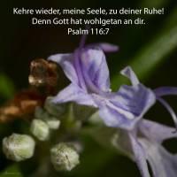 Kehre wieder, meine Seele, zu deiner Ruhe! Denn Jehova hat wohlgetan an dir ( Psalm 116,7 )