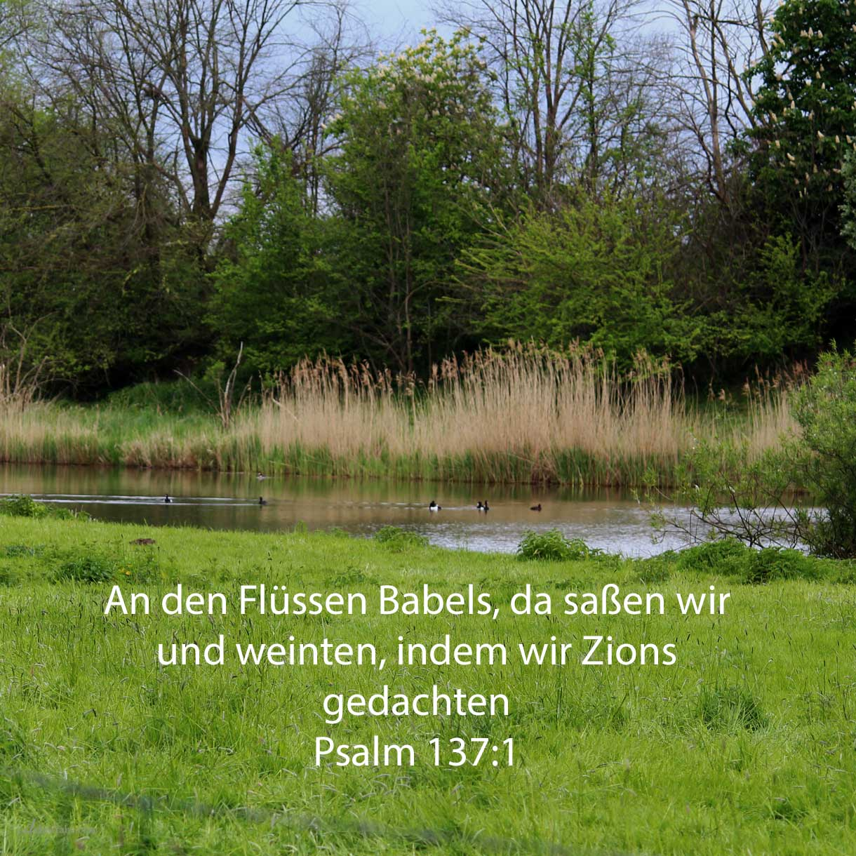 By the rivers of Babylon, there we sat down, yea, we wept, when we remembered Zion ( psalms 137:1 )