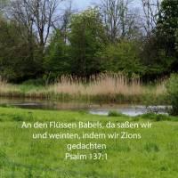 An den Flüssen Babels, da saßen wir und weinten, indem wir Zions gedachten ( Psalm 137,1 )