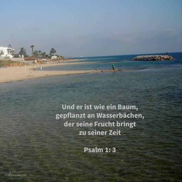 Und er ist wie ein Baum, gepflanzt an Wasserbächen, der seine Frucht bringt zu seiner Zeit, und dessen Blatt nicht verwelkt ( Psalm 1,3 )