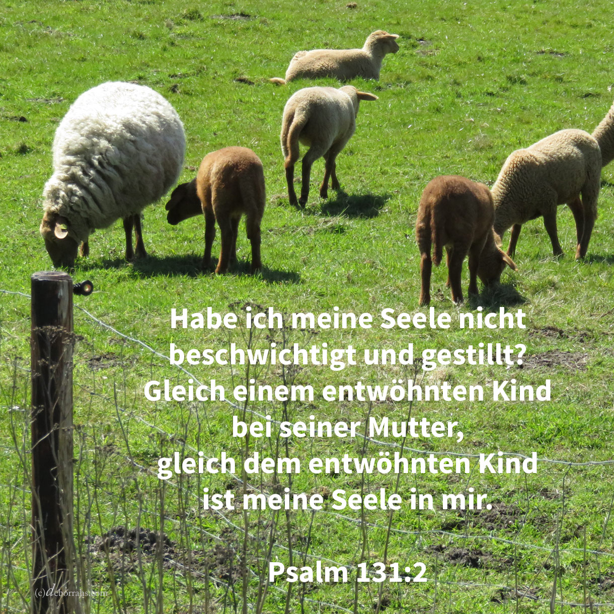 Habe ich meine Seele nicht beschwichtigt und gestillt? Gleich einem entwöhnten Kinde bei seiner Mutter, gleich dem entwöhnten Kinde ist meine Seele in mir ( Psalm 131,2 )