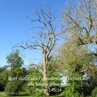 Jehova stützt alle Fallenden und richtet auf alle Niedergebeugten ( Psalm 145,14 )