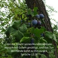 Von der Frucht seines Mundes wird ein Mann mit Gutem gesättigt, und das Tun der Hände eines Menschen kehrt zu ihm zurück ( Sprüche 12,14 )