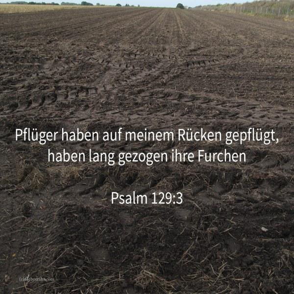 Pflüger haben auf meinem Rücken gefplügt, haben lang gezogen ihre Furchen ( Psalm 129,3 )