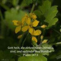 Jehovah, der da heilt, die zerbrochenen Herzens sind, und ihre Wunden verbindet ( Ps 147,3 )