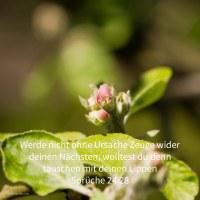 Werde nicht ohne Ursache Zeuge wider deinen Nächsten; wolltest du denn täuschen mit deinen Lippen ( Sprüche 24,28 )