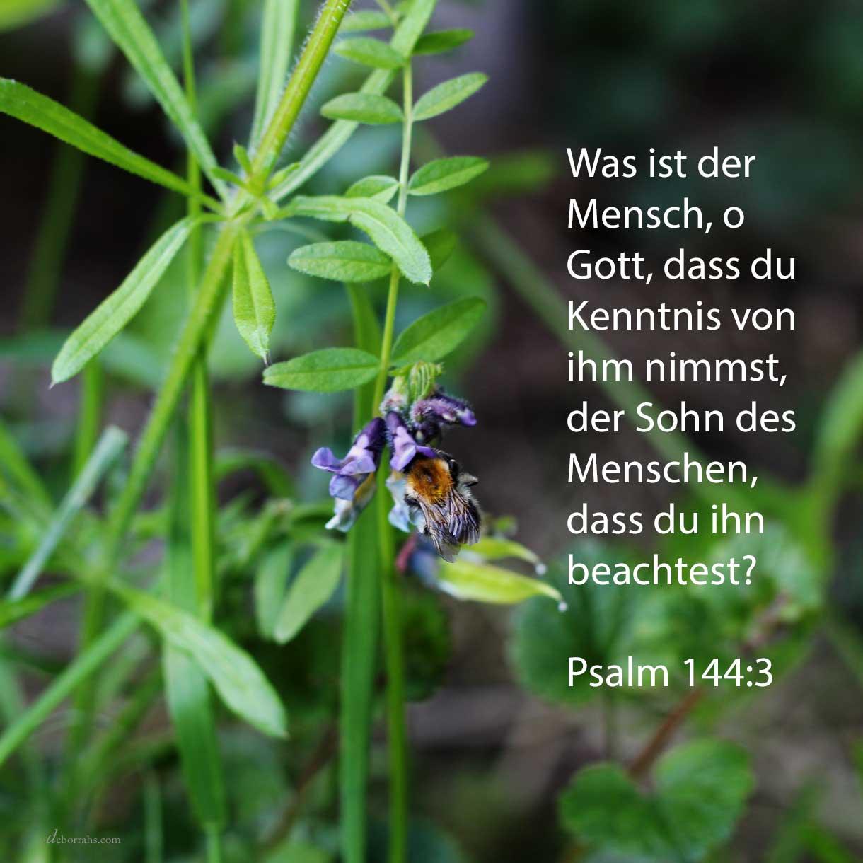 Jehova, was ist der Mensch, dass du Kenntnis von ihm nimmst, der Sohn des Menschen, dass du ihn beachtest ( Psalm 144,3 )